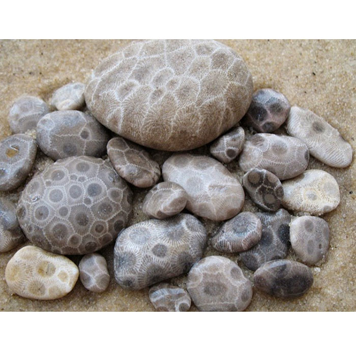 collection of petoskey stones