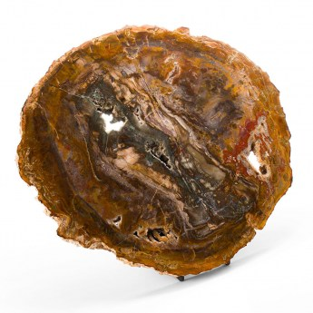 large polished piece of petrified wood