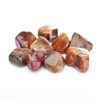 Highly polished petrified wood tumbled stones